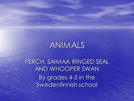 ANIMALS PERCH, SAIMAA RINGED SEAL AND WHOOPER SWAN By grades 4-5 in the Swedenfinnish school.