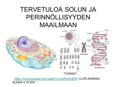 TERVETULOA SOLUN JA PERINNÖLLISYYDEN MAAILMAAN https://www.youtube.com/watch?v=uhpRrK5-B7M OLIPA KERRAN ELÄMÄ 4,10 MINhttps://www.youtube.com/watch?v=uhpRrK5-B7M.
