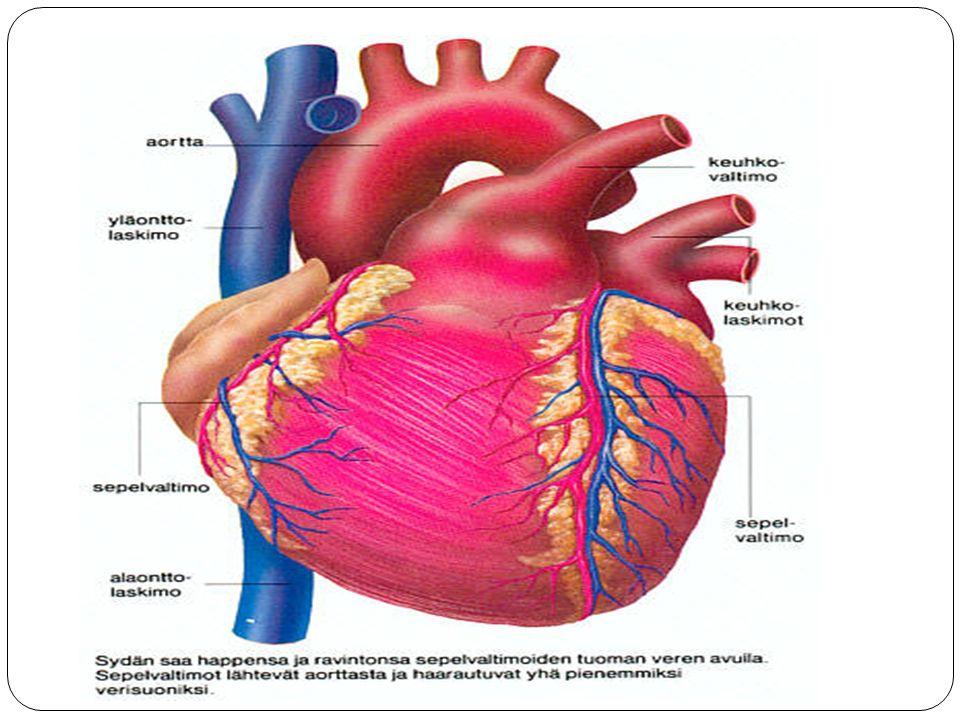 Kuva: opetuksessa käytetty anatomian kirja