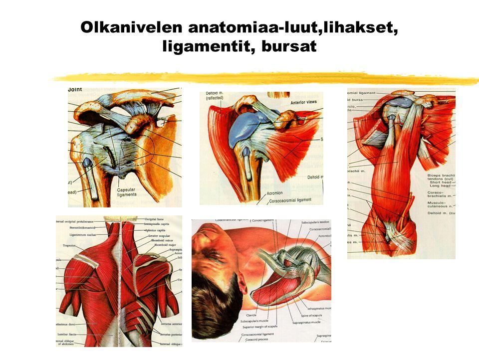 Olkanivelen anatomiaa-luut,lihakset, ligamentit, bursat