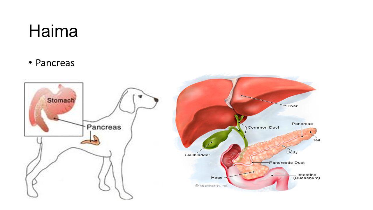 Haima Pancreas