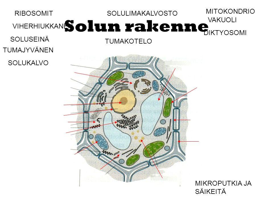 Solun rakenne MITOKONDRIO RIBOSOMIT SOLULIMAKALVOSTO VAKUOLI