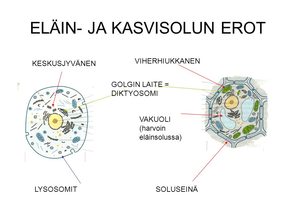 proteiinien tehtävät Kokkola