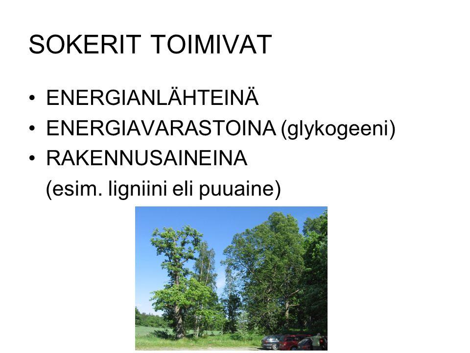 SOKERIT TOIMIVAT ENERGIANLÄHTEINÄ ENERGIAVARASTOINA (glykogeeni)