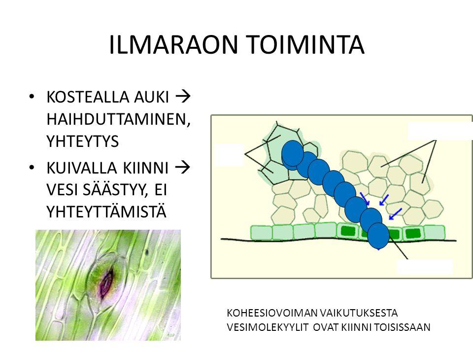 ILMARAON TOIMINTA KOSTEALLA AUKI  HAIHDUTTAMINEN, YHTEYTYS
