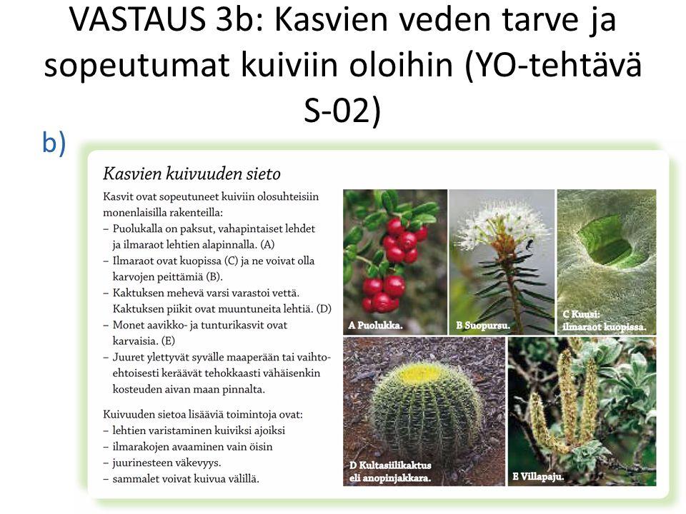 VASTAUS 3b: Kasvien veden tarve ja sopeutumat kuiviin oloihin (YO-tehtävä S-02)