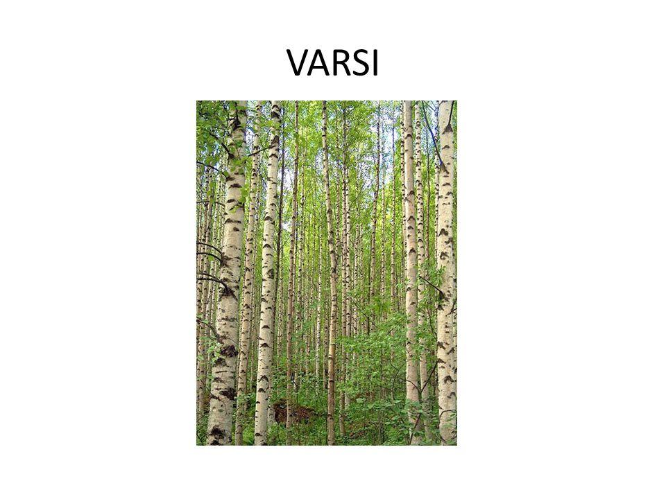 VARSI