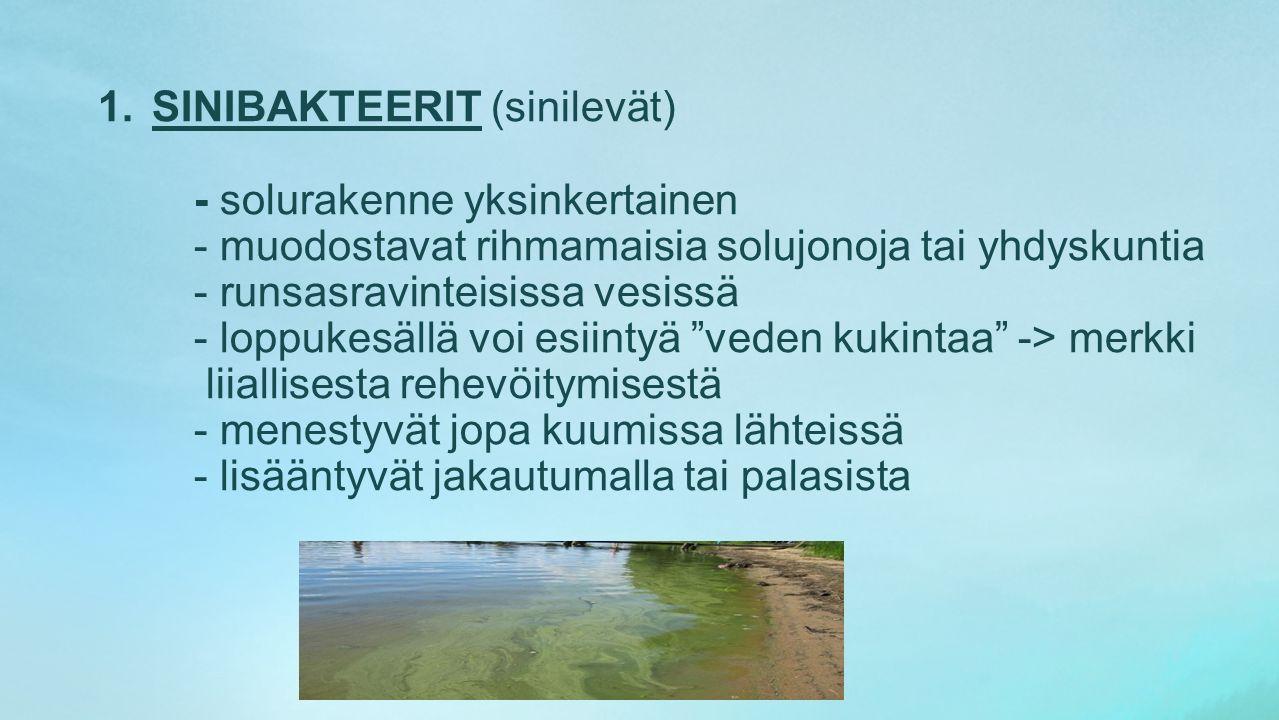 SINIBAKTEERIT (sinilevät)