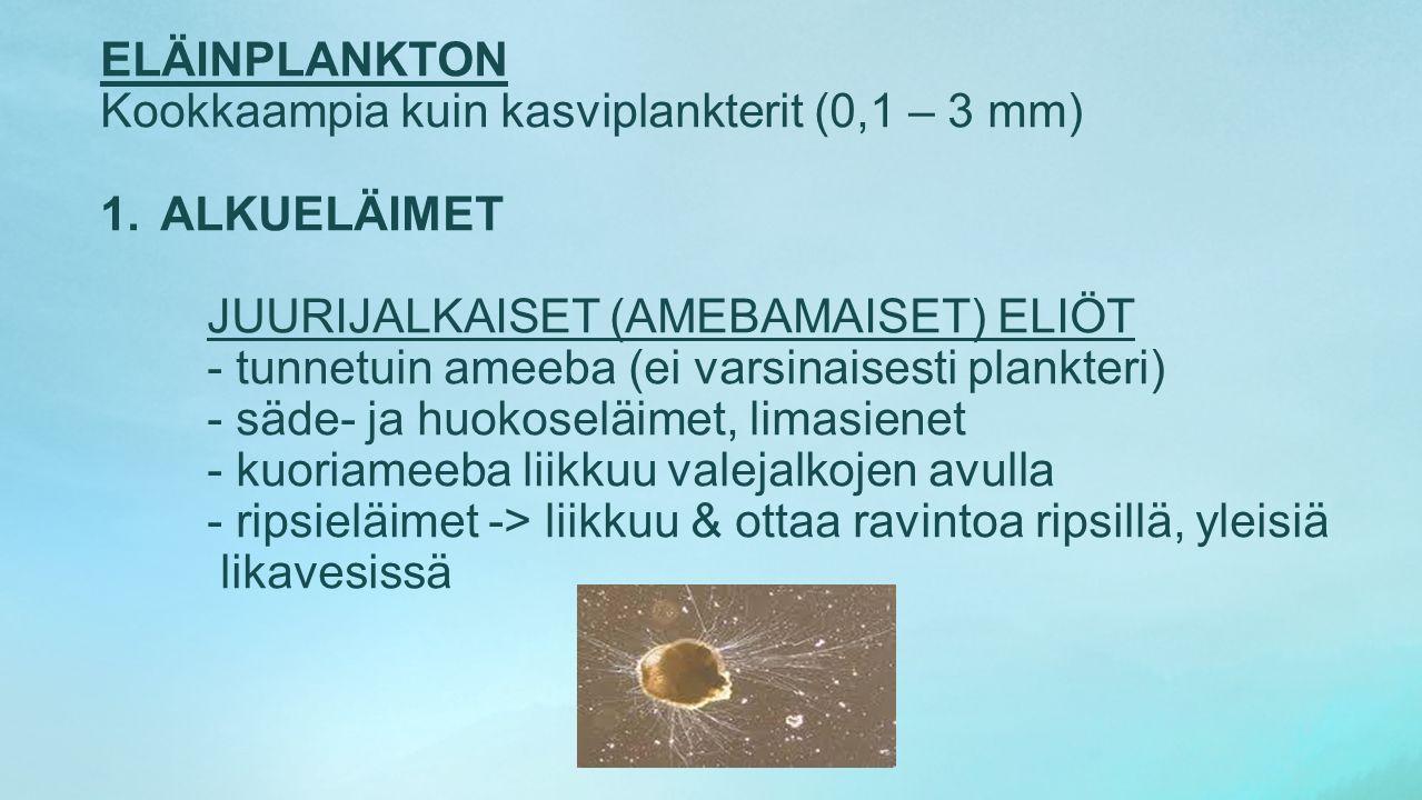 Kookkaampia kuin kasviplankterit (0,1 – 3 mm) ALKUELÄIMET