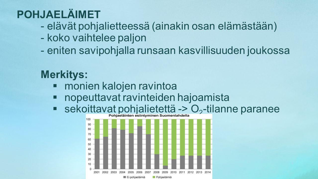 POHJAELÄIMET - elävät pohjalietteessä (ainakin osan elämästään) - koko vaihtelee paljon. - eniten savipohjalla runsaan kasvillisuuden joukossa.