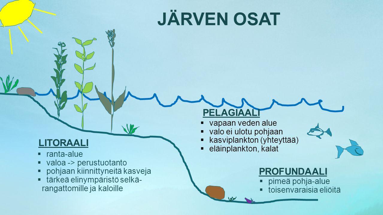 PELAGIAALI LITORAALI PROFUNDAALI vapaan veden alue