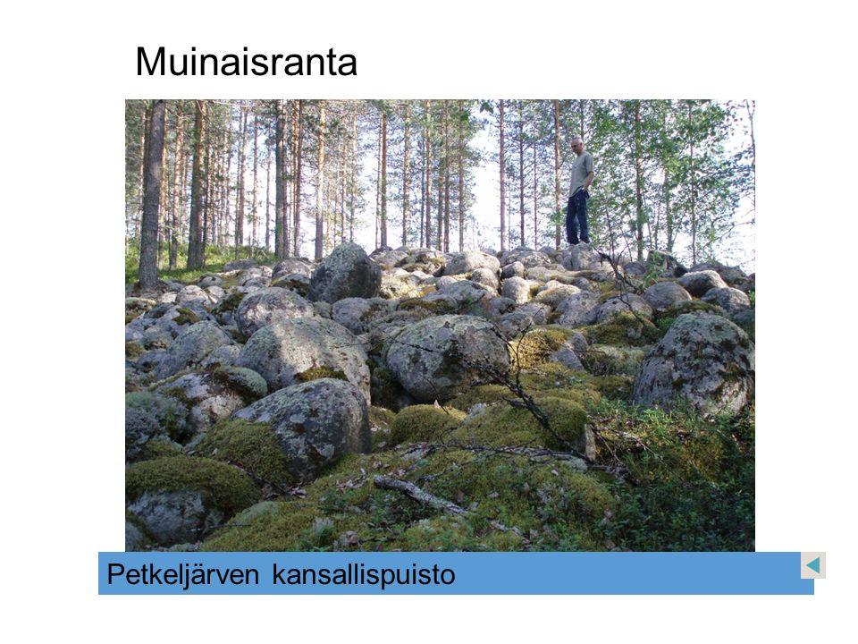 Muinaisranta Petkeljärven kansallispuisto