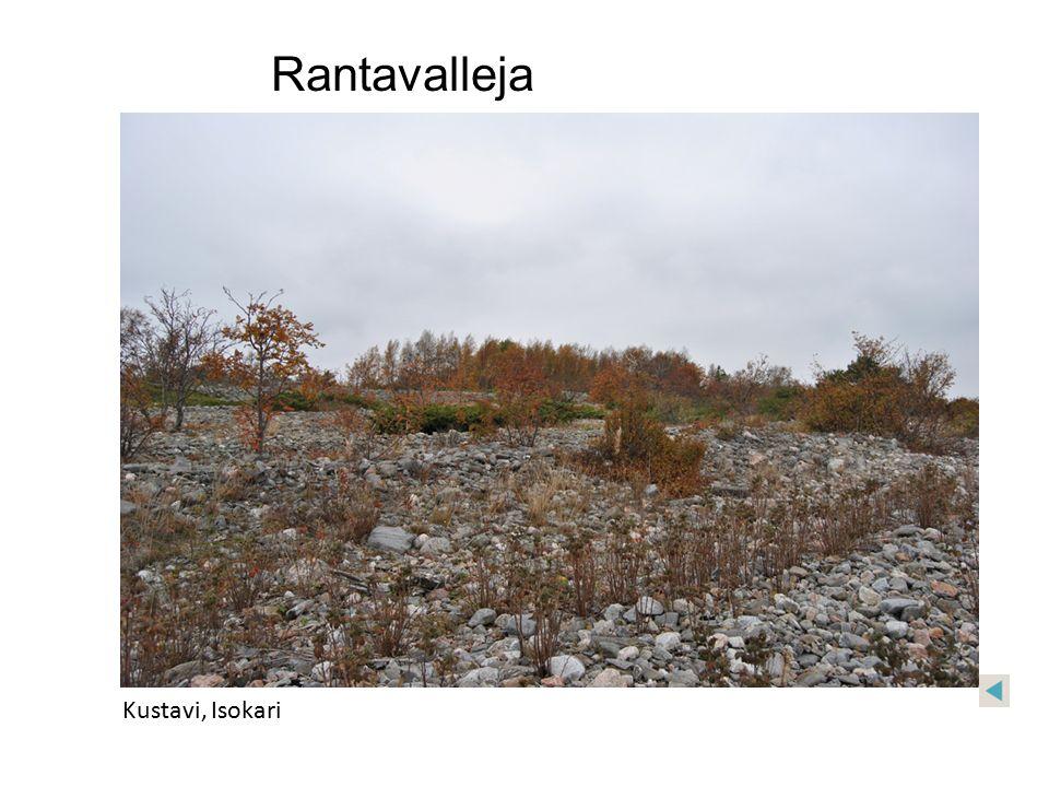 Rantavalleja Kustavi, Isokari