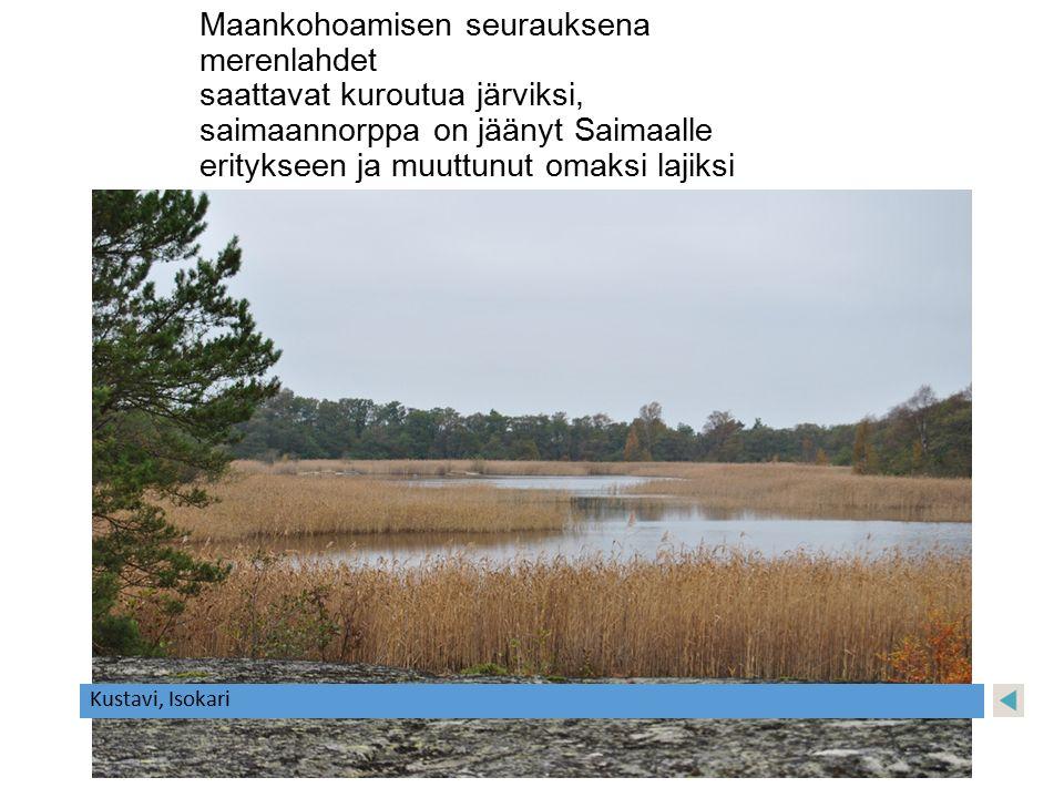 Maankohoamisen seurauksena merenlahdet saattavat kuroutua järviksi, saimaannorppa on jäänyt Saimaalle eritykseen ja muuttunut omaksi lajiksi