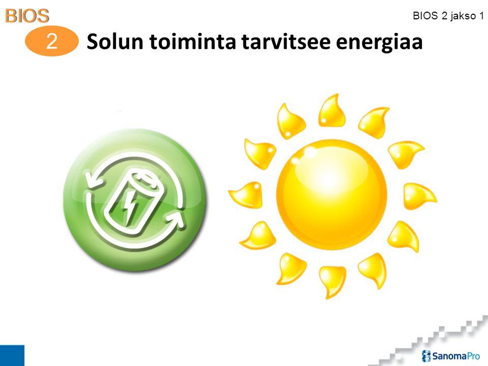 Solun toiminta tarvitsee energiaa
