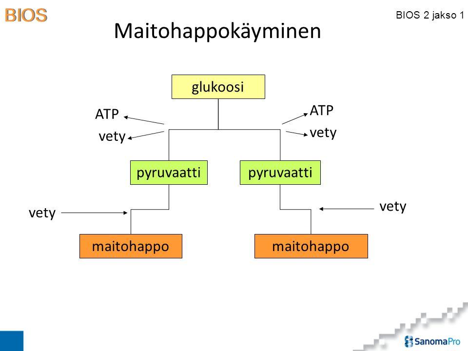 Maitohappokäyminen glukoosi pyruvaatti ATP vety pyruvaatti ATP vety
