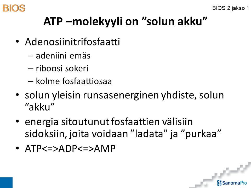 ATP –molekyyli on solun akku