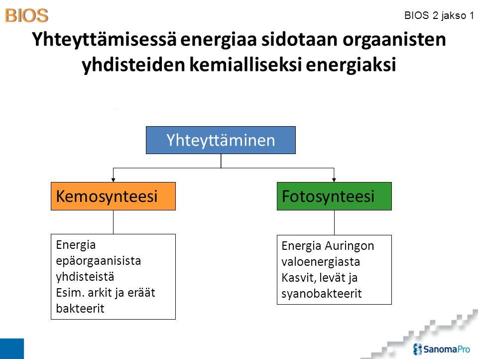 Yhteyttämisessä energiaa sidotaan orgaanisten yhdisteiden kemialliseksi energiaksi