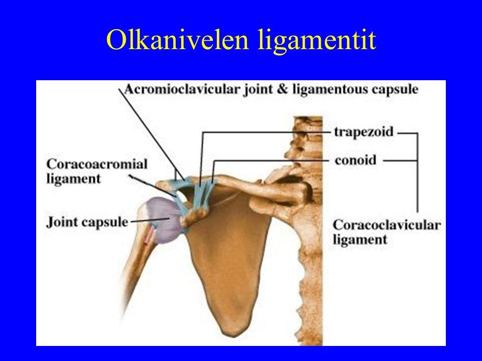 Olkanivelen ligamentit