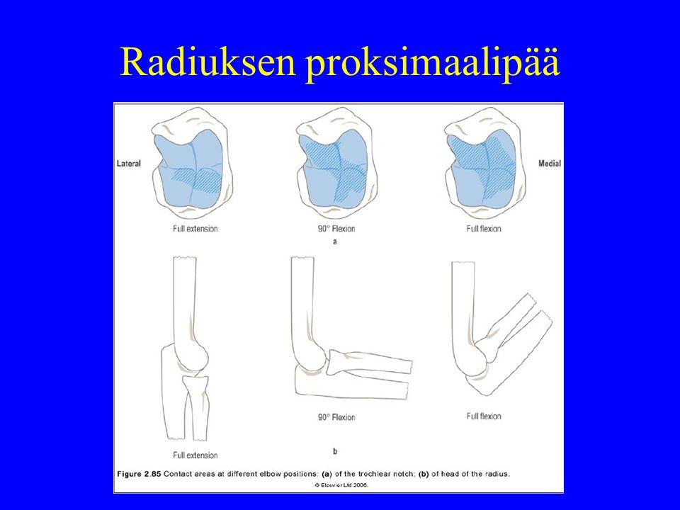 Radiuksen proksimaalipää