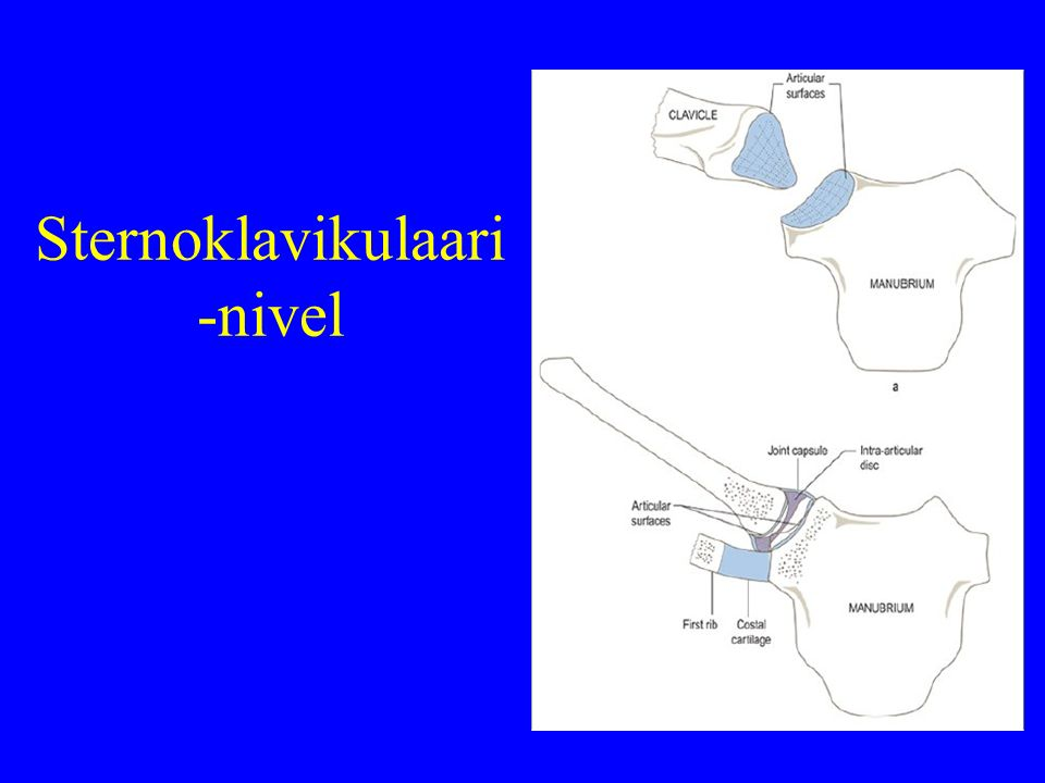 Sternoklavikulaari-nivel