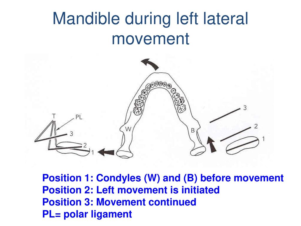 Mandible during left lateral movement