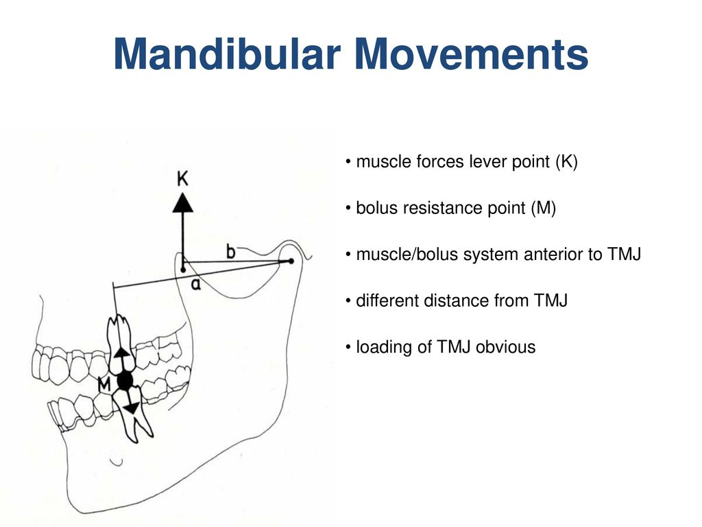 Mandibular Movements muscle forces lever point (K)