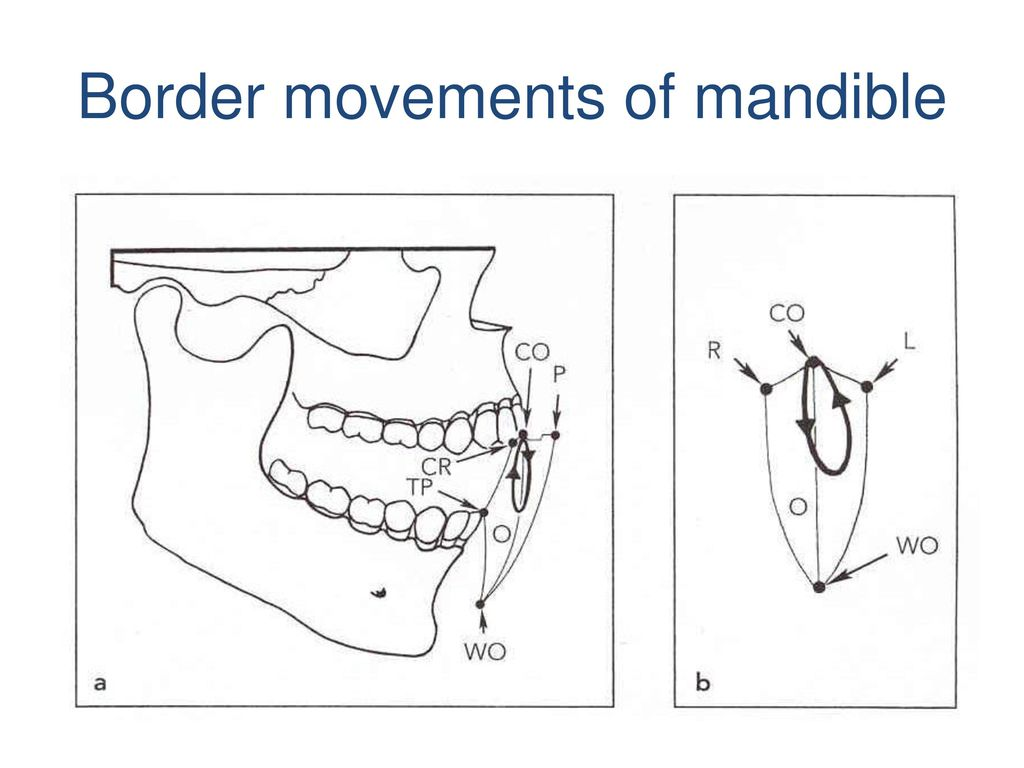 Border movements of mandible