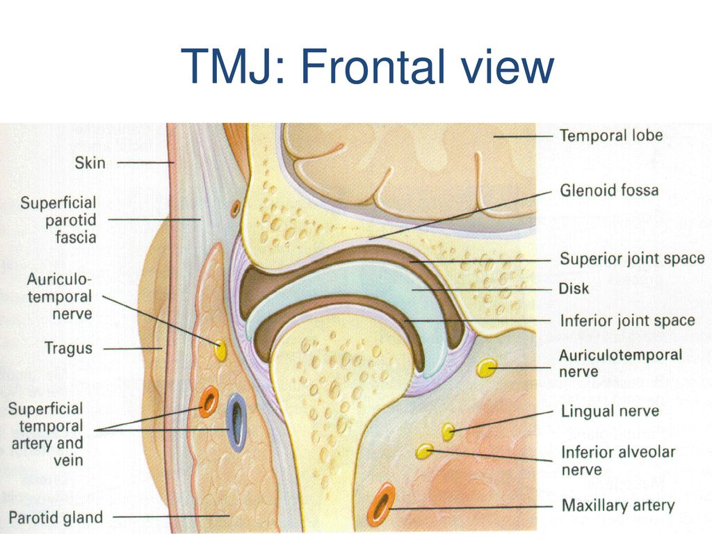 TMJ: Frontal view