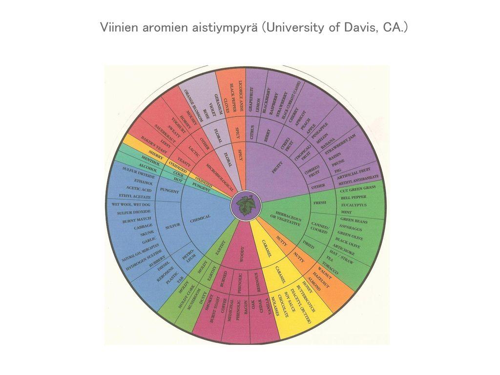 Viinien aromien aistiympyrä (University of Davis, CA.)
