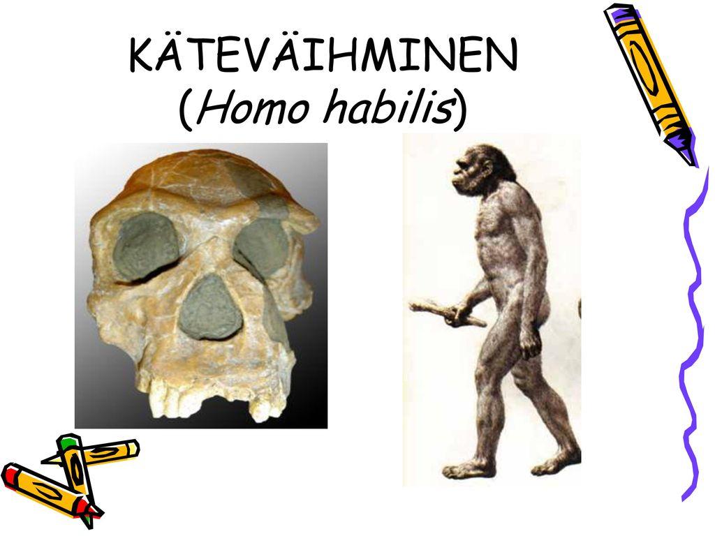 KÄTEVÄIHMINEN (Homo habilis)