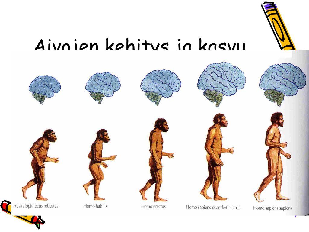 Aivojen kehitys ja kasvu