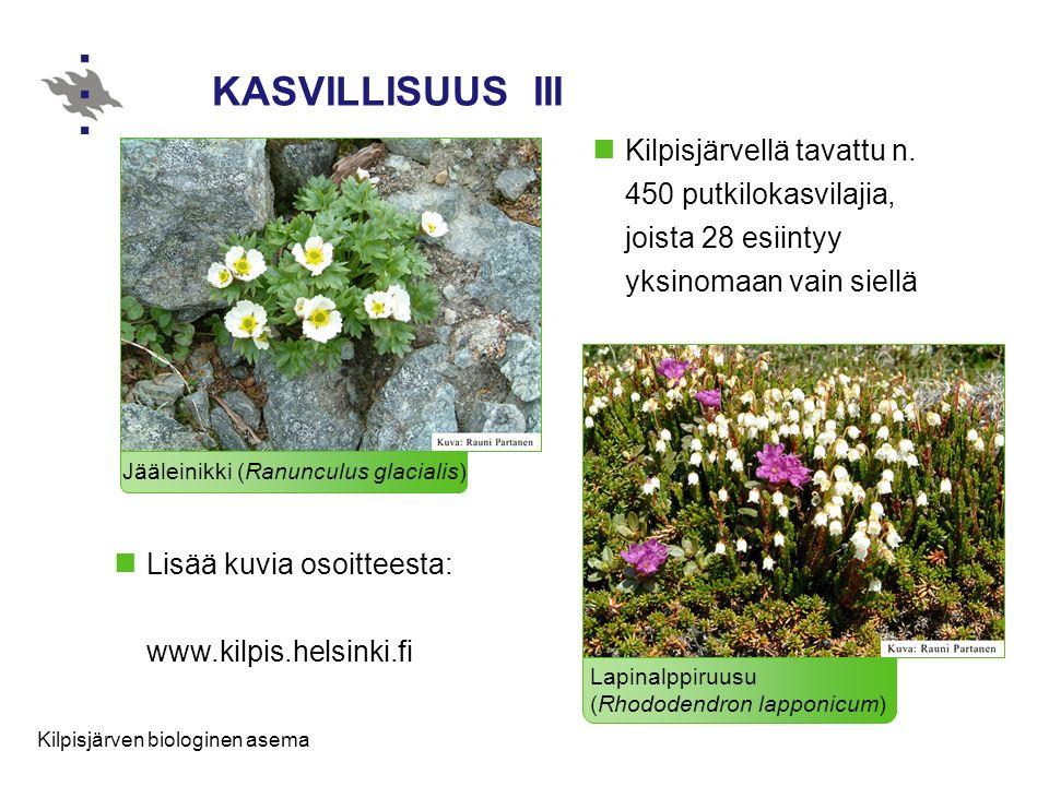 KASVILLISUUS III Kilpisjärvellä tavattu n. 450 putkilokasvilajia, joista 28 esiintyy yksinomaan vain siellä.