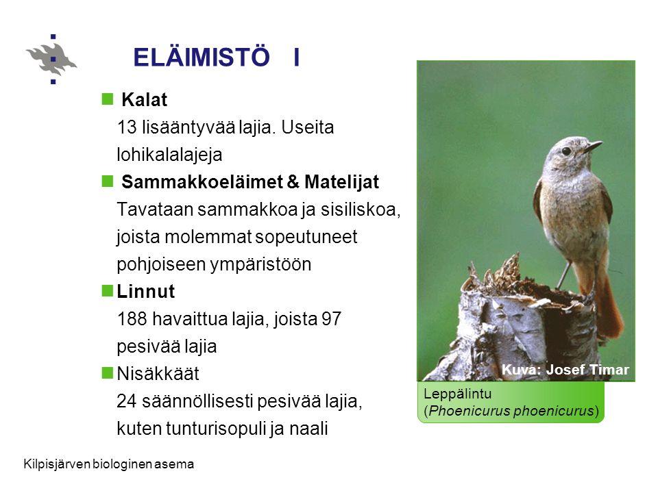 ELÄIMISTÖ I Kalat 13 lisääntyvää lajia. Useita lohikalalajeja