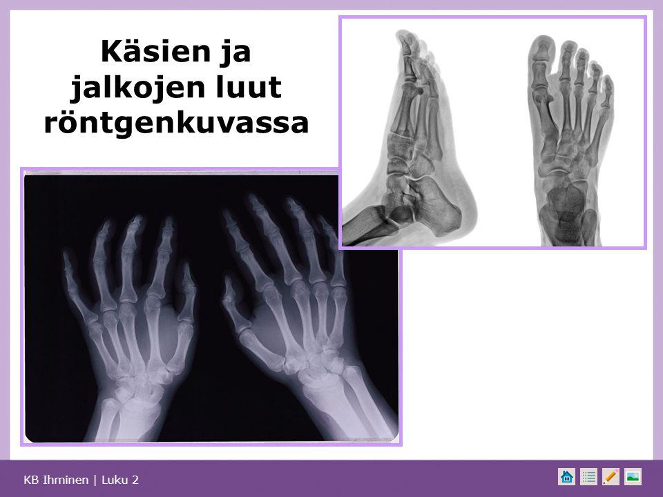 Käsien ja jalkojen luut röntgenkuvassa