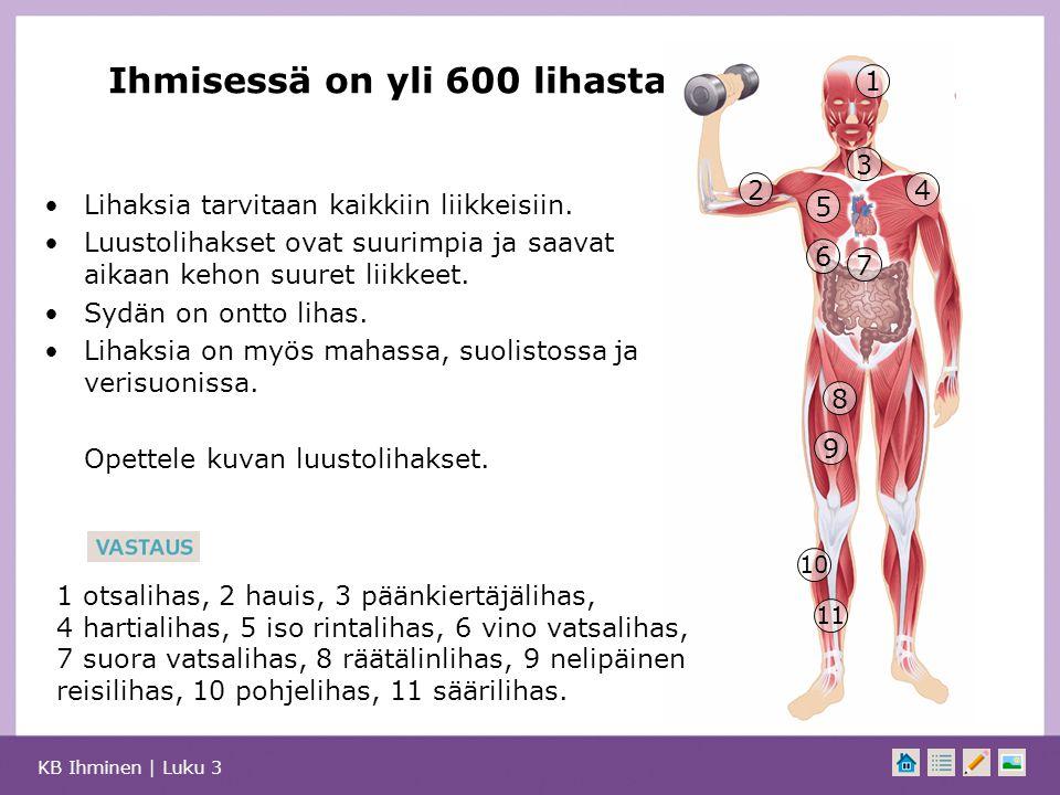 Ihmisessä on yli 600 lihasta