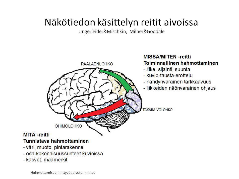 Hahmottamiseen liittyvät aivotoiminnot