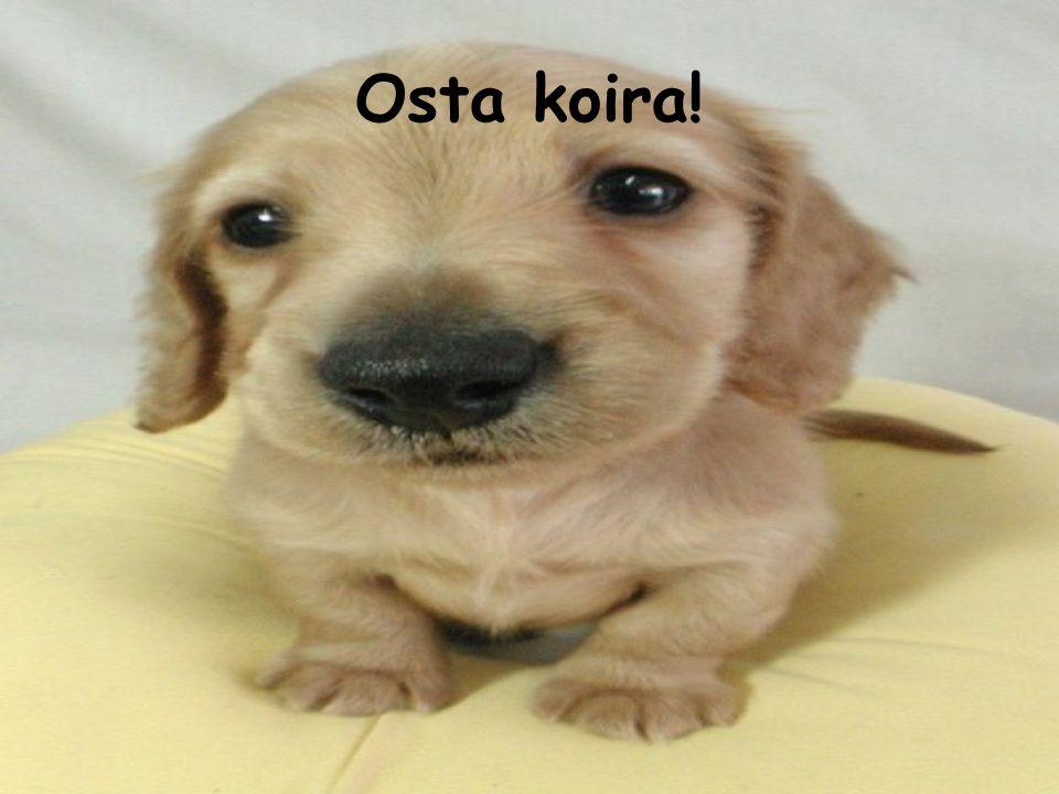 Osta koira!
