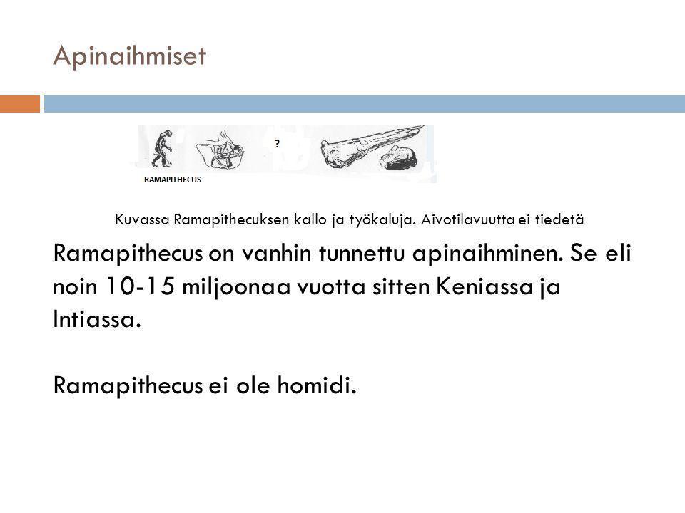 Apinaihmiset Kuvassa Ramapithecuksen kallo ja työkaluja. Aivotilavuutta ei tiedetä.