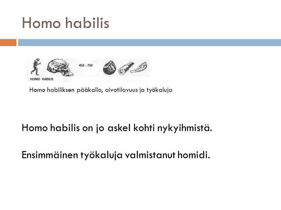 Homo habilis Homo habilis on jo askel kohti nykyihmistä.
