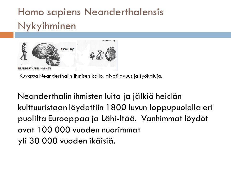 Homo sapiens Neanderthalensis Nykyihminen
