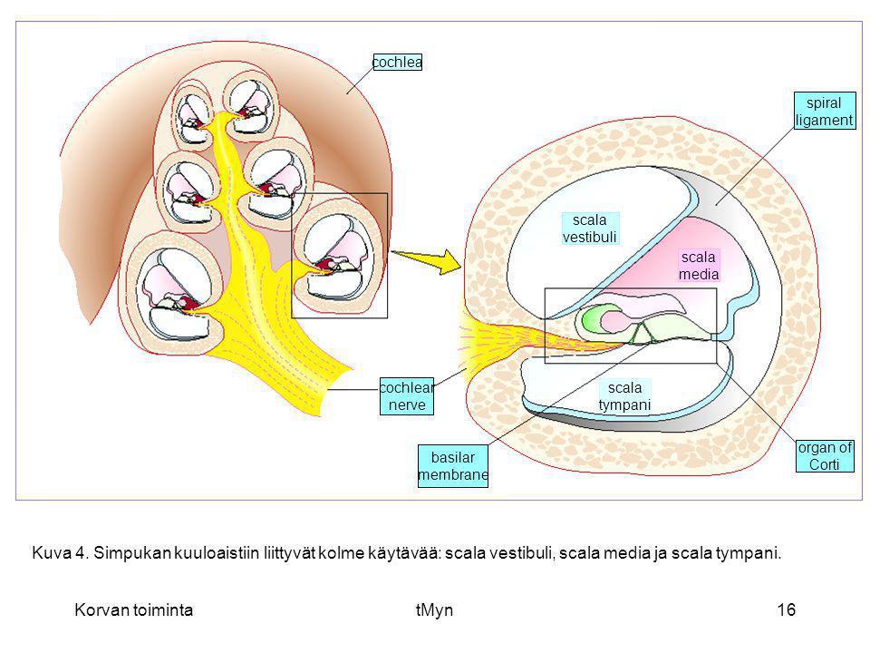 cochlea spiral. ligament. scala. vestibuli. scala. media. cochlear. nerve. scala. tympani.