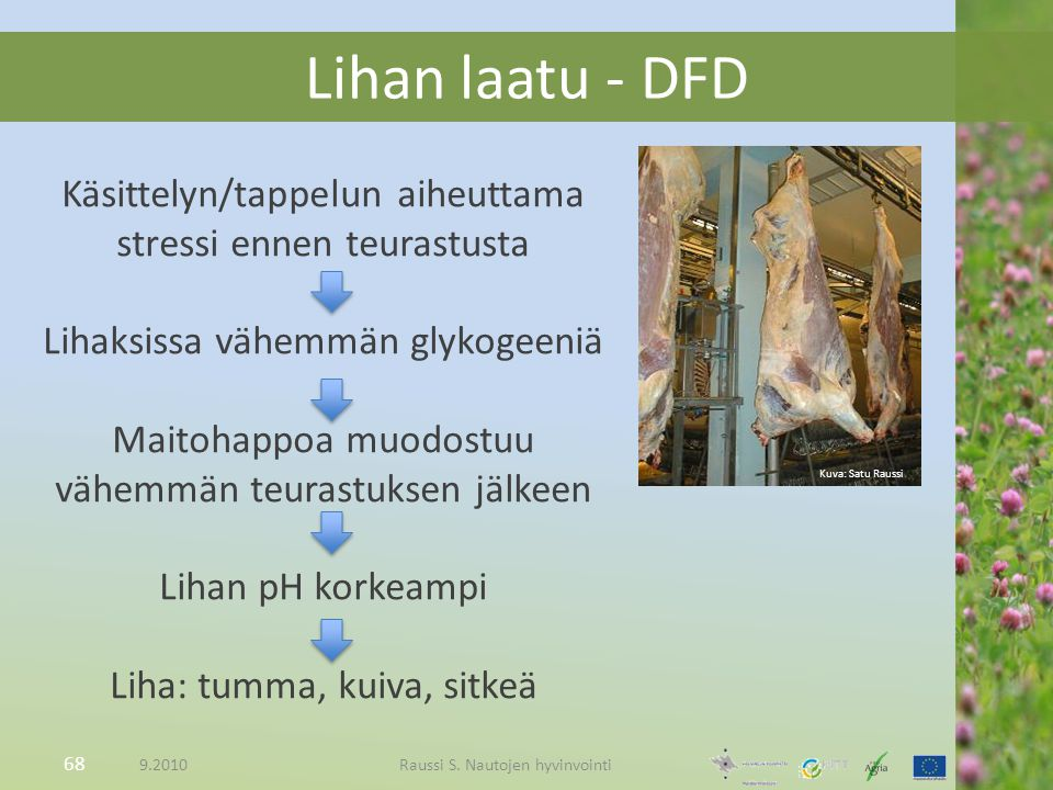 Lihan laatu - DFD Käsittelyn/tappelun aiheuttama stressi ennen teurastusta. Lihaksissa vähemmän glykogeeniä.