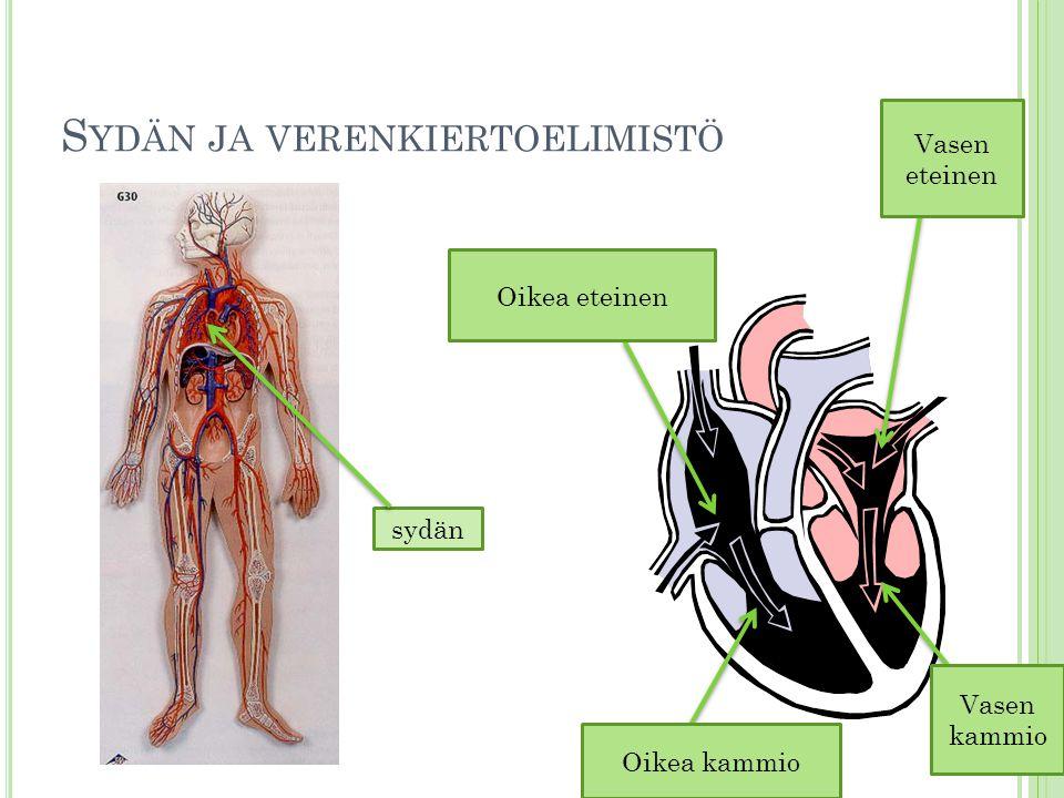 Sydän ja verenkiertoelimistö
