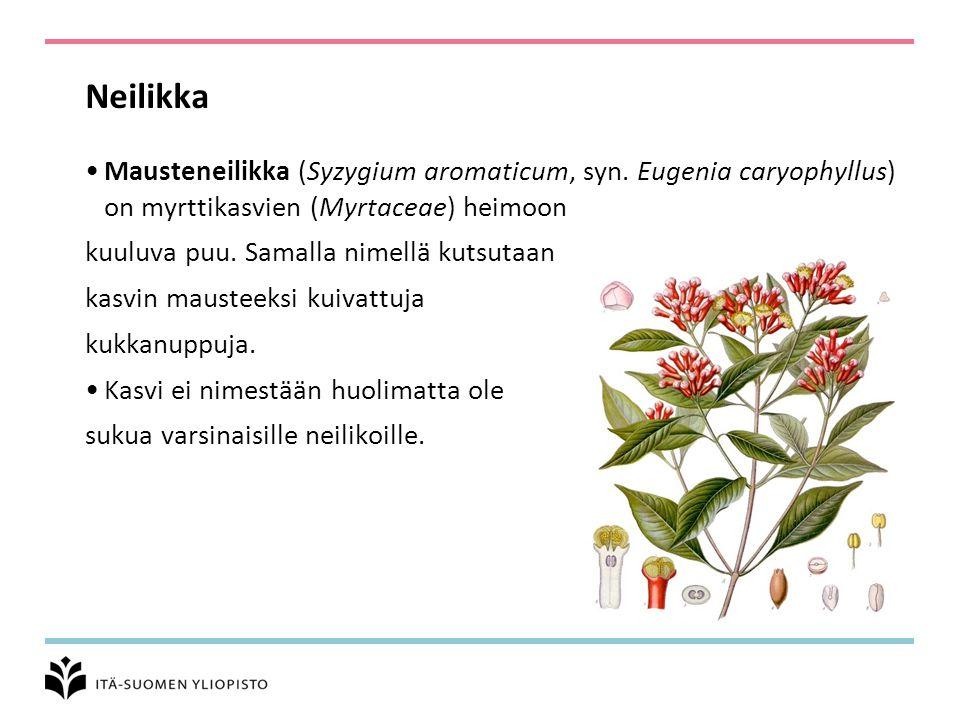 Neilikka Mausteneilikka (Syzygium aromaticum, syn. Eugenia caryophyllus) on myrttikasvien (Myrtaceae) heimoon.
