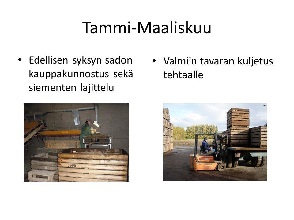 Tammi-Maaliskuu Edellisen syksyn sadon kauppakunnostus sekä siementen lajittelu.