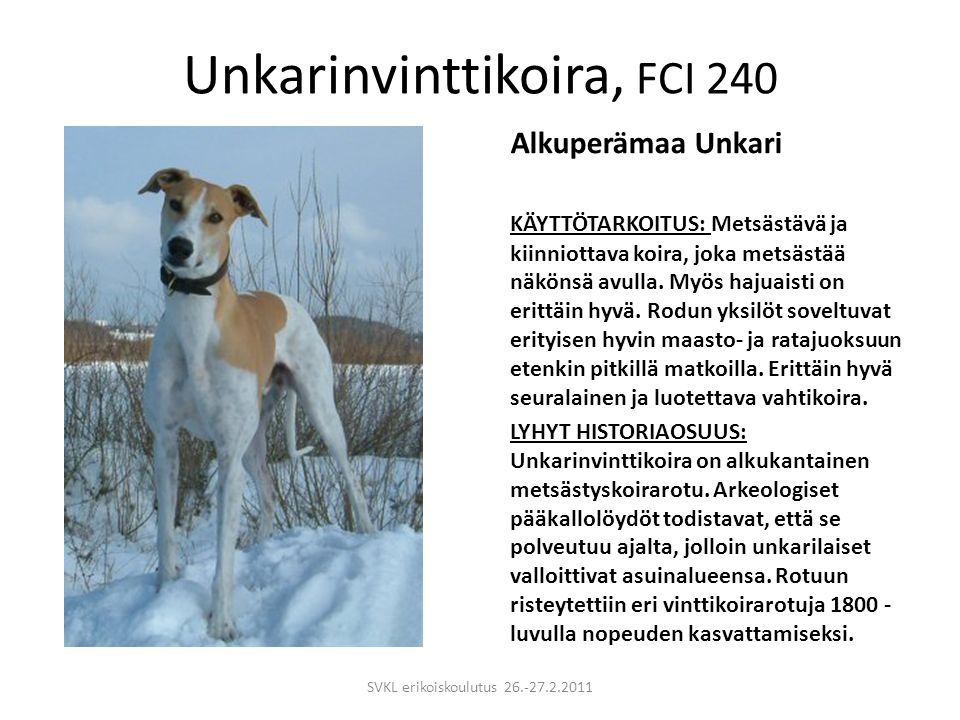 Unkarinvinttikoira, FCI 240