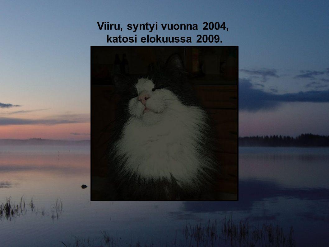 Viiru, syntyi vuonna 2004, katosi elokuussa 2009.