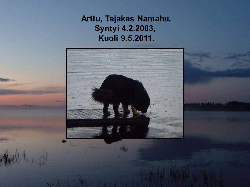 Arttu, Tejakes Namahu. Syntyi 4.2.2003, Kuoli 9.5.2011.