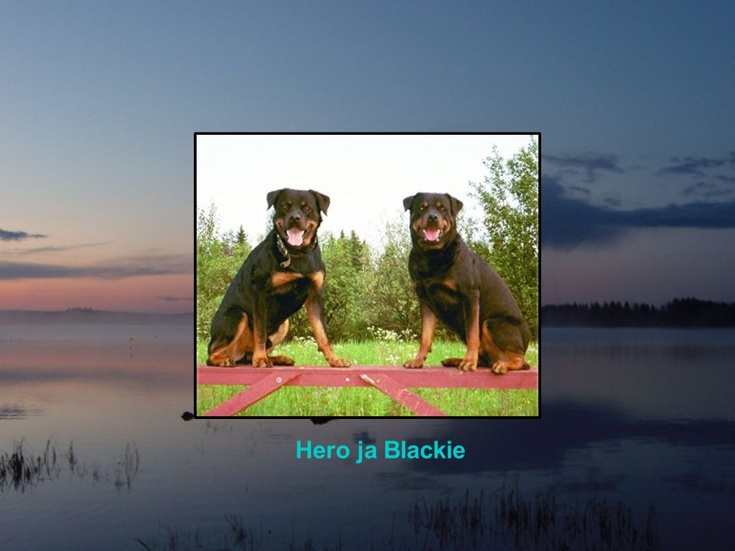 Hero ja Blackie